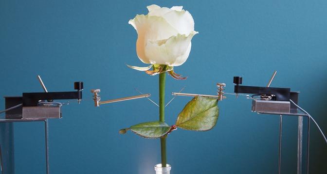 Rose-bots